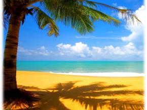 paesaggio spiaggia palma